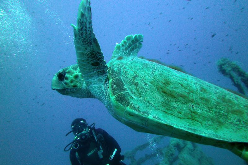 Diver with turtle in the blue cyprus sea
